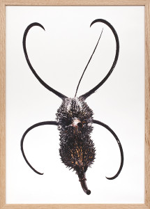 Cadre A2-40x60-Vertical-griffes du diable